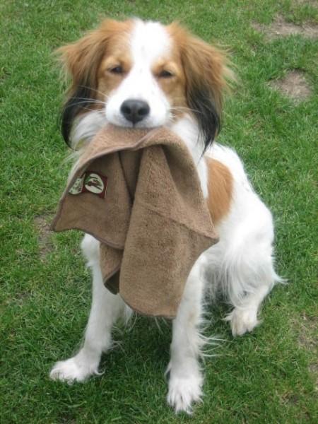 Dogwalker Pfotenreinigungstuch